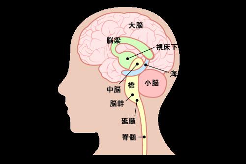 頭の仕組み